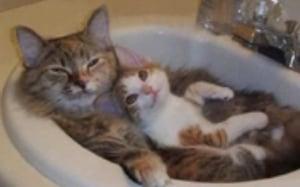 KittyCutenessFeatured